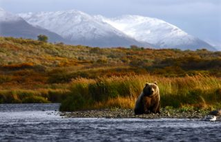 National Park Service's New Rule To be an Opposite of Most Alaskans Values