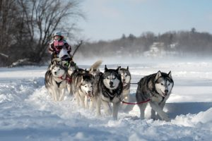 Dog Sled: Alaska's Transportation Tradition