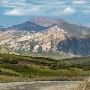 Drive to Denali for Stunning Summer Sights