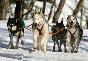 Anchorage Considers Tightening City's Dog Leash Ordinance